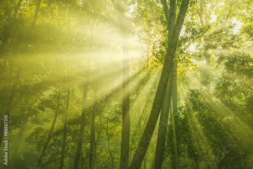 In de dag Bomen Green Forest with sunbeam
