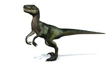 Velociraptor Dinosaurs - Isola...