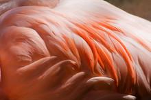Flamingo Feathers Closeup
