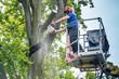 canvas print picture - Baumrückschnitt mit Hubsteiger - Kollegen beobachten den Holzfäller