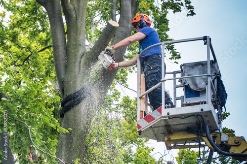Baumrückschnitt mit Hubsteiger - Kollegen beobachten den Holzfäller Wallpaper Mural