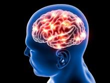 Cervello Neuroni Sinapsi, Anatomia Corpo Umano, Profilo Testa, Malattia