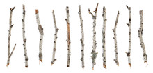 Collection Dry Branches Birch Isolated On White