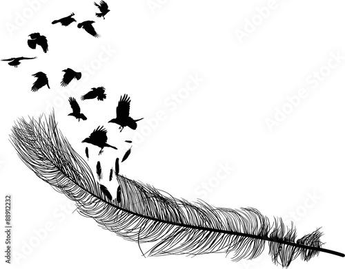 wrony latające z długiej sylwetki piór na białym tle