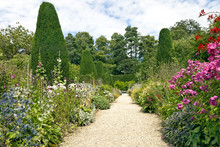 Garden Stone Pathway, Summer Flowers In Bloom, Conifers, Shrubs, Tall Trees