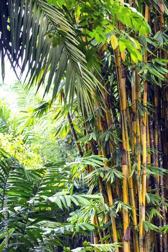 bambusowy-gaj-w-dzungli-filipin