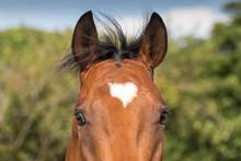 Heart Marked Horse