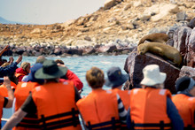 Tourists Watching For Fur Seal...