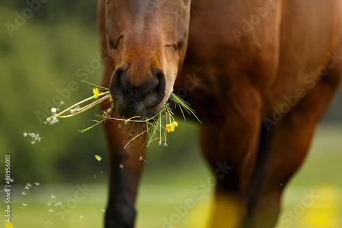 Pferdemaul frißt