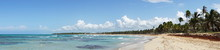 Panoramabild Eines Palmenstran...