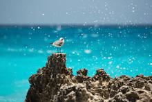Seagull In Cancun