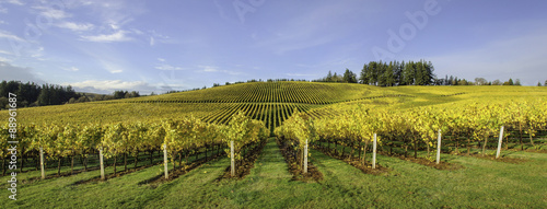 Wall Murals Vineyard Agriculture and Fall Colors of Oregon