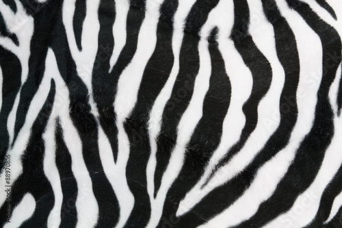 Foto op Canvas Zebra Zebra texture background