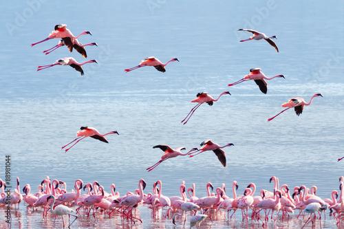 Garden Poster Flamingo Flying flamingo