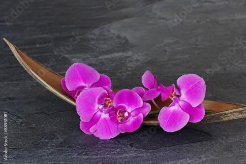 Juliste Orchideenblüte