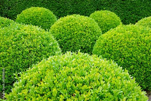 Pistache Gartengestaltung