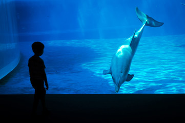 Little boy in front of a dolphin