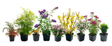 Shrubs In Containers On A White Background