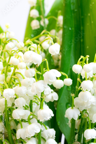 Poster Muguet de mai lilies of the valley on a white background isolated