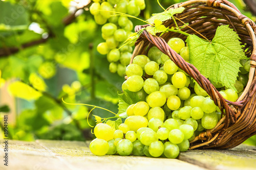 Fotografiet  White grapes in basket