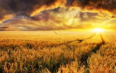Naklejka Krajobraz Sonnenuntergang auf Feld, Fokus auf Vordergrund