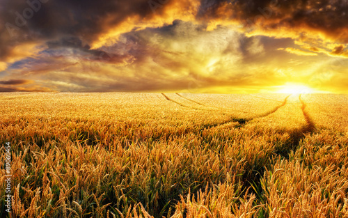 Garden Poster Deep brown Sonnenuntergang auf Feld, Fokus auf Vordergrund