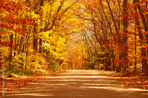 Ingelijste posters Herfst Autumn scene with road
