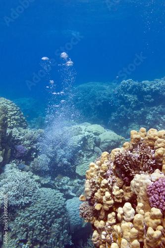 Staande foto Koraalriffen colorful coral reef with air bubbles, underwater