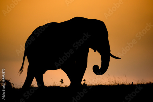 African Elephant Silhouette Canvas Print