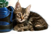 Gray Striped Kitten Playing With A Boot