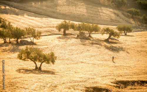 Photo Stands Horses paard in Andalusisch landscap