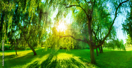 Staande foto Lente Panorama of green summer park. Sun shining through trees, leaves.