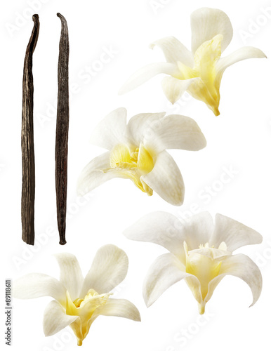 Fotografía  Vanilla flowers aromatic, fresh vanila flower and stick on white background for ingredient label