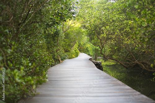 Foto op Canvas Weg in bos Path in Mangrove forest in Bali