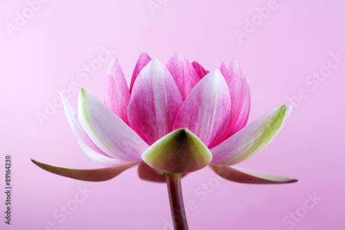 zmyslowy-kwiat-lotosu