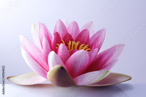 Poster de jardin Nénuphars water lily, lotus on pastel background