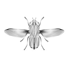 Fly. 3d Style Vector Illustration For Print Tatto Or T-shirt.