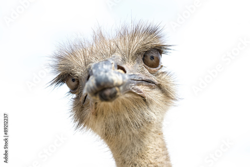 In de dag Struisvogel Close up view of an ostrich bird head