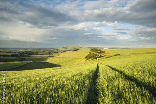 Foto op Aluminium Donkergrijs Beautiful Summer sunset landscape Steyning Bowl on South Downs