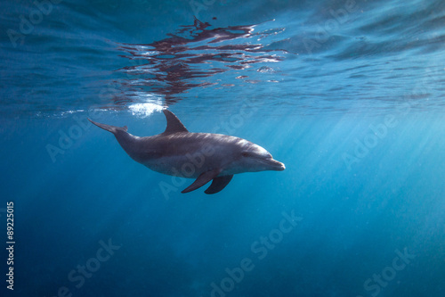 Photo sur Aluminium Dauphin Surface dolphin