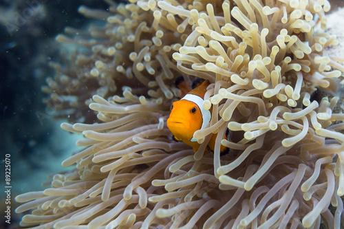 Fotografie, Tablou  Found Nemo