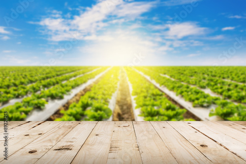 Fotobehang Cultuur abstract blurred field lettuce and sunlight with wood table.