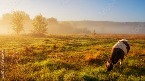 Photo cow grazing