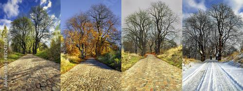 Fotografie, Obraz  Four seasons collage: Spring, Summer, Autumn, Winter.