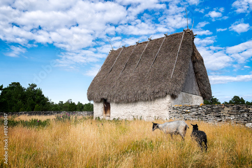Photo Old thatched roof barn and curly haired sheep native to Gotland, Sweden