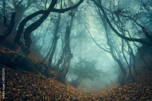 Deurstickers Bos Trail through a mysterious dark old forest in fog. Autumn
