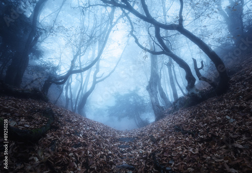 Papiers peints Forets Trail through a mysterious dark old forest in fog. Autumn