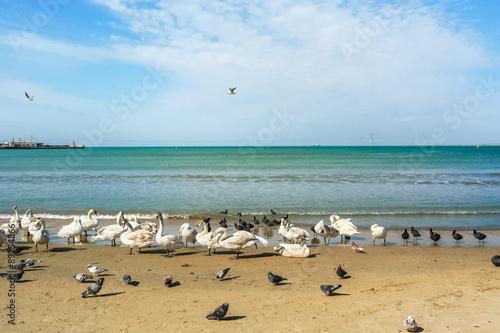 Fotografie, Obraz  Birds on a sea beach on a spring day