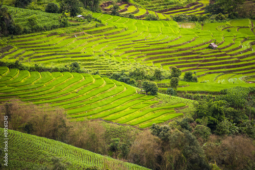 Poster Rijstvelden Terraced rice field in Pa Pong Pieng. Chiang Mai ,Thailand.