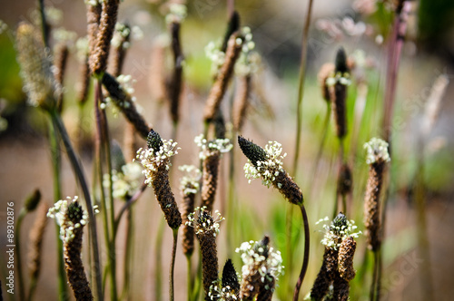 Grass type plant with ring of tiny white flowers around the top that grass type plant with ring of tiny white flowers around the top that look like little mightylinksfo Choice Image